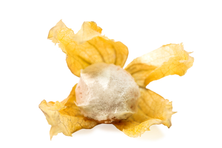 rotten and mold physalis on a white background