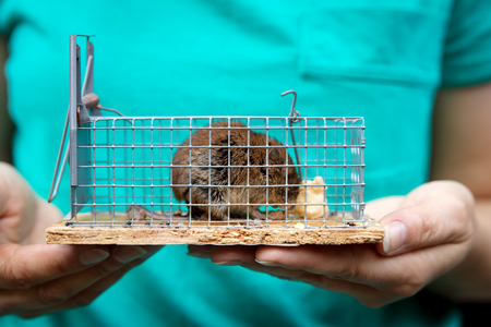 woman holding a little living mouse in a live catpure mousetrap with cheese inside