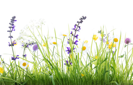 wild flower meadow in front of white background, studio shot Stock Photo