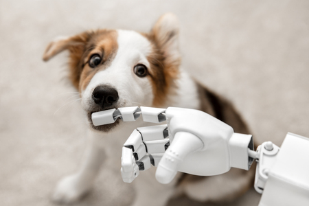 cyborg or robot hand is holding his finger to a puppy, sitting on the floor. concept cybernetic or robotic Stock Photo