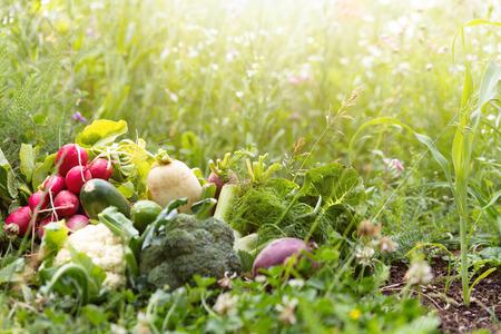 Various organic vegetables is lying in a flower meadow, enough copyspace