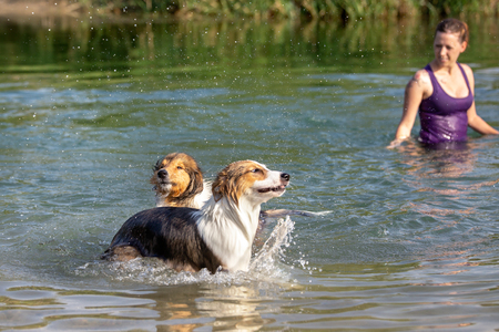 Woman with her two dogs into a lake or river, fun and cooling time at the summer walk