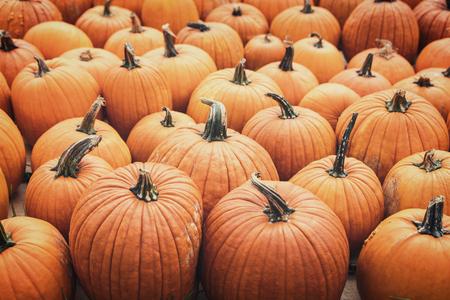Lots of Halloween pumpkins, orange Jack o lantern background