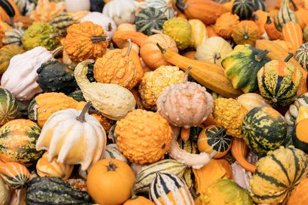 Viele kleine Zierkürbisse oder Dekokürbisse, Hintergrund für Dekoration im Herbst
