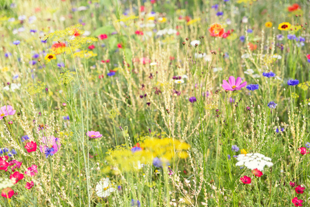 Natural habitat for bees and butterflies, protection with native flowers and herbs, spring or summer season