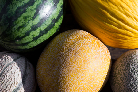 a group of different melons in the sunlight
