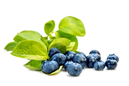 American Blueberries or whortleberries and leaves isolated on white background