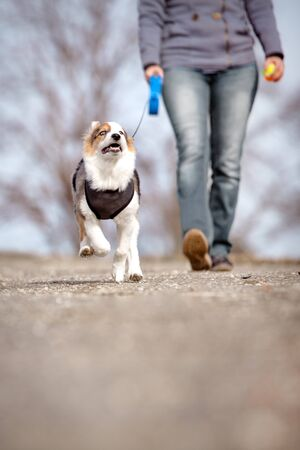 woman is doing a walk with her puppy dog, while the pet is kept on a lash Stock Photo
