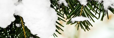 Fir needles of a christmas tree with fresh new snow on it, panorama with copyspace Фото со стока