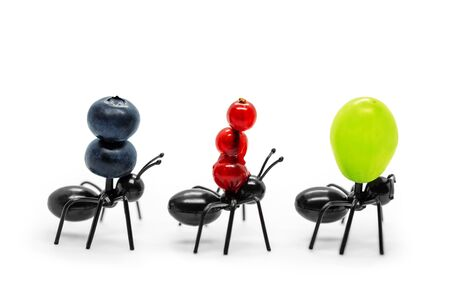 Ant figures transporting fruits, concept global export and logistics, isolated on white 스톡 콘텐츠