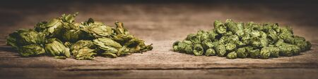 Dried green hop pellets and hop cones on wooden ground, ingredient for a brewery or beer plant, panorama