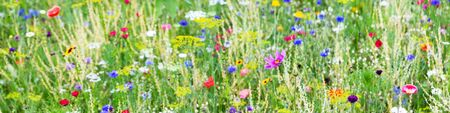 Panorama, wildflower meadow with wild herbs and flowers, conservation for insects