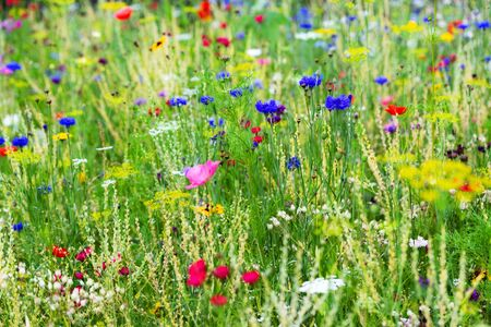Butterfly meadow background, colorful native flower field in the own garden