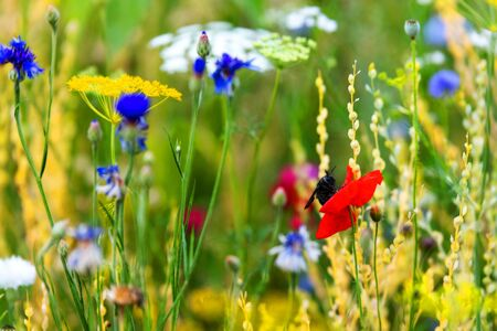 Wild herbs and flowers growing up at the spring season, native wildflowers in the own garden