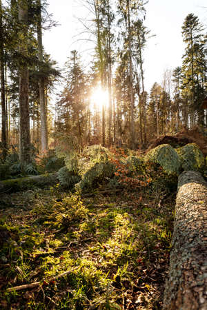 scenery shot of a storm damaged forest, broken trees after hurricane in Germany, black forest