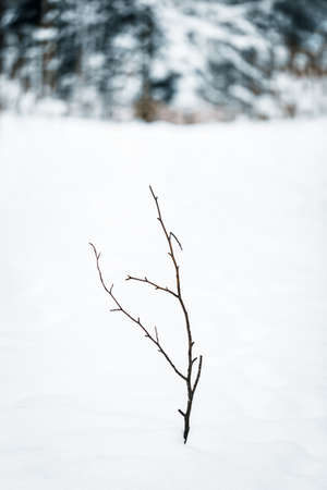 Little branch among deep new snow, forest in the background, lonely plant, copyspace