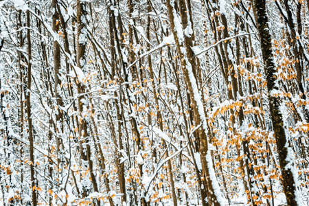 Bushes with leaves and trees at winter season, ice and snow forest background Stock fotó