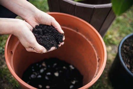 woman is putting some potting compost or flower soil into a pot with an lemon tree