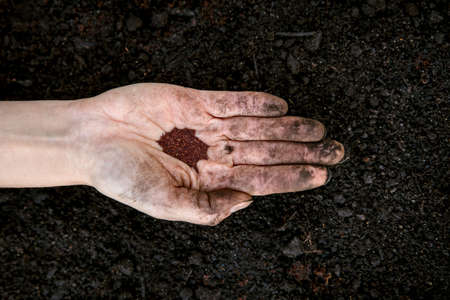 woman is holding and planting some oregano seed in a plant pot full of fresh soil and compost Stock fotó
