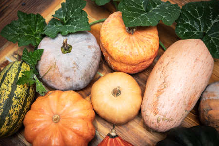Fresh raw different pumpkins with green leaves on wooden table, cucurbita maxima Banque d'images