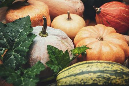 Autumn market with various sorts of pumpkins, thanksgiving and marrows, Cucurbita maxima