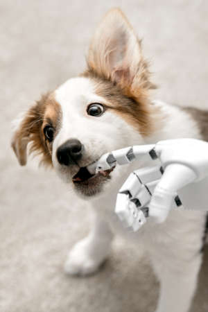 cyborg or robot hand is holding his finger to a puppy, sitting on the floor. concept cybernetic or robotic Banque d'images