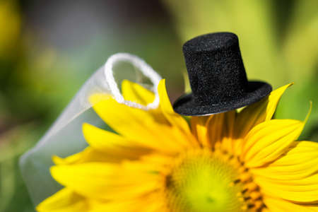 tophat and veil of newlyweds on a sunflower, concept wedding invitation card or letter of thanks