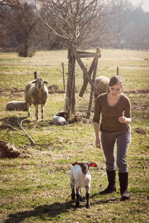 Woman and a lamb, sheep herd in the background, concept farmstead Banque d'images
