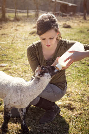 Rearing and growth of a little lamb, hand raising and protection
