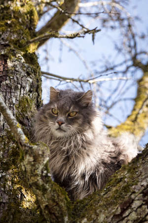 Long-haired cat sitting on a tree, concept rescue for a trapped pet Banque d'images