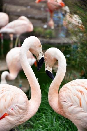 pink floyd: San Francisco CA, Zoo