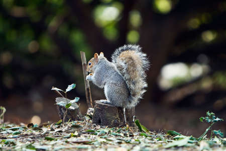 a cute squirrel on the root photo