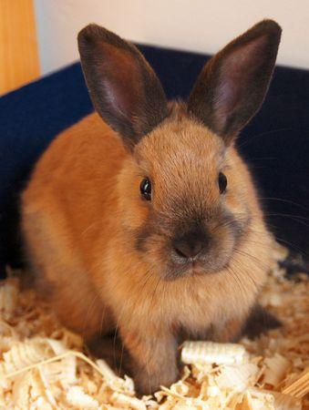 homelike: Tame rabbit Stock Photo