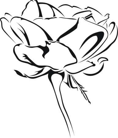 Stammes-Rose wie Standard-Bild - 12802751