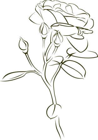Stammes-Rose wie