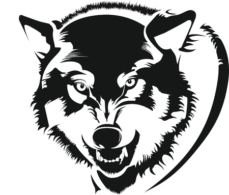 wolf face: The face of a wolf