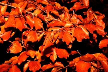 Herbstlaub im Fokus Standard-Bild