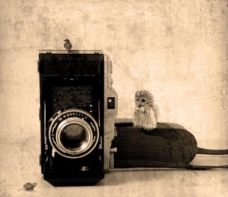 Photogaphy Standard-Bild - 17673695
