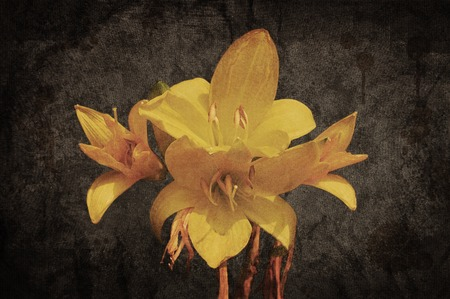 grunged: Yellow Asiatic lily on old grunged canvas