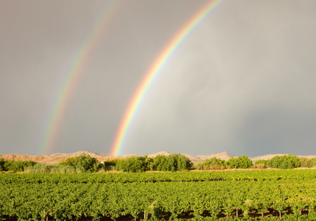 northern cape: Double rainbow over vineyard in Northern Cape South Africa