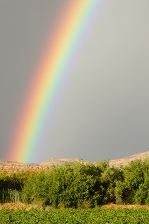 northern cape: Rainbow zoom over grape vineyards in Northern Cape South Africa