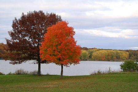 fall autumn trees leaves