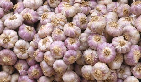 Division garlic white purple lot Imagens