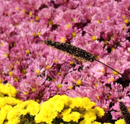 aquatic herb: Grass flower