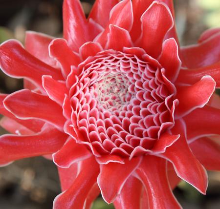 Beautiful flower petals , macro and beautiful red color