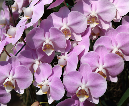 Beautiful purple orchids background