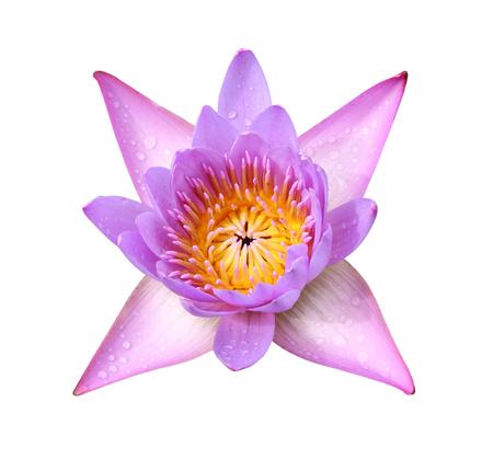 Gelbe Lotusblume Auf Weißen Hintergrund Lizenzfreie Fotos, Bilder ...