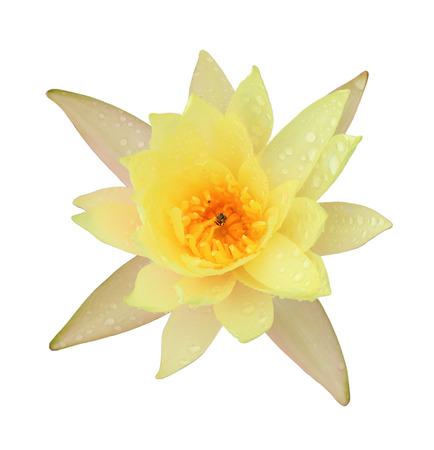 Lila Lotus Blume Isoliert Auf Weißem Hintergrund Lizenzfreie Fotos ...