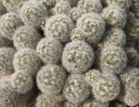 Top view of group of cactus succulent. natural background Banco de Imagens