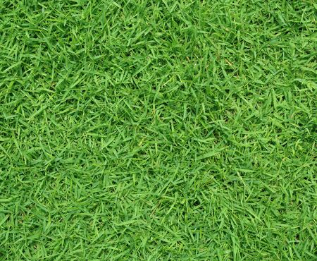 Green grass texture background, Green lawn, Banque d'images